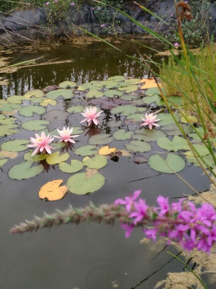 Journées du patrimoine 2020 - Annulé | À la découverte du jardin