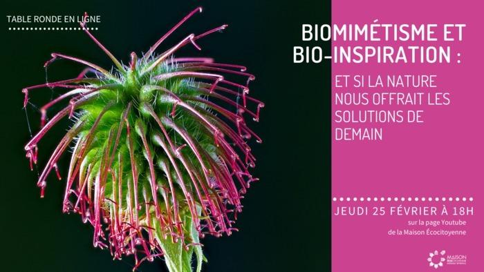 Biomimétisme et bio inspiration, et si la nature nous offrait les solutions de demain: les Jeudis de la transition de la Maison Ecocitoyenne