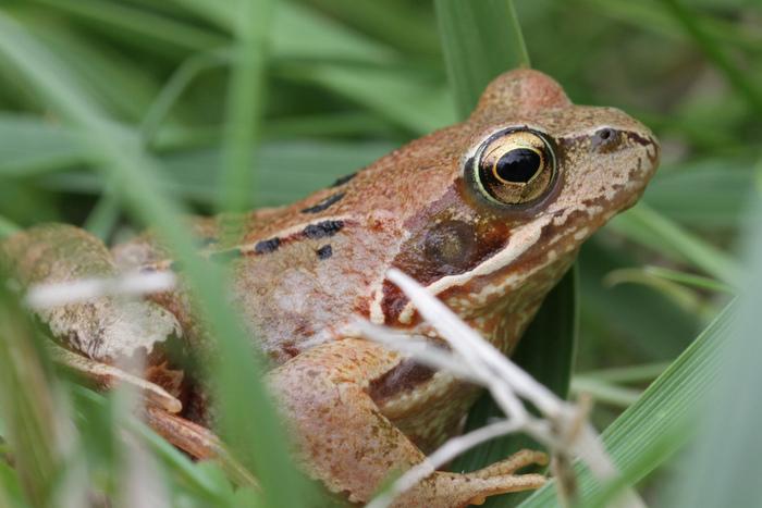 Jeu nature : la mare aux grenouilles