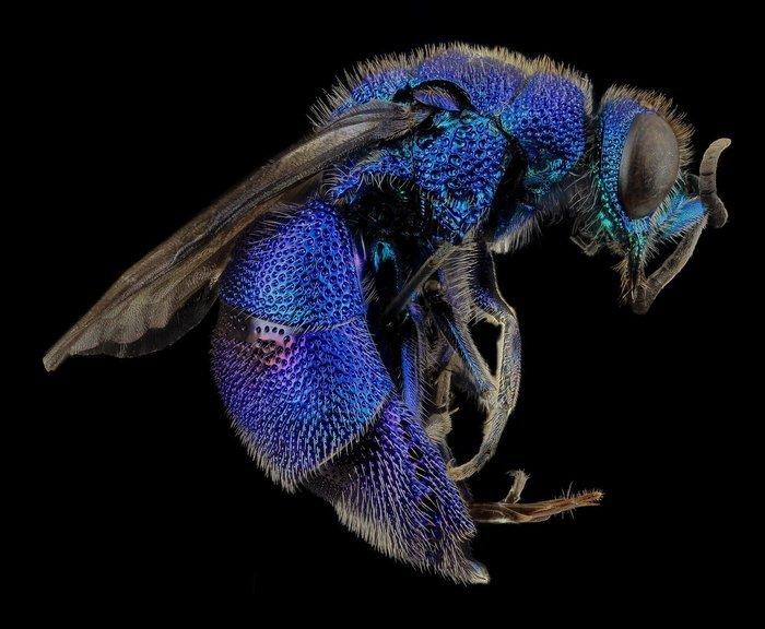 Apprenez en plus sur l'anatomie des insectes et ce qui les différencie des autres petites bêtes.