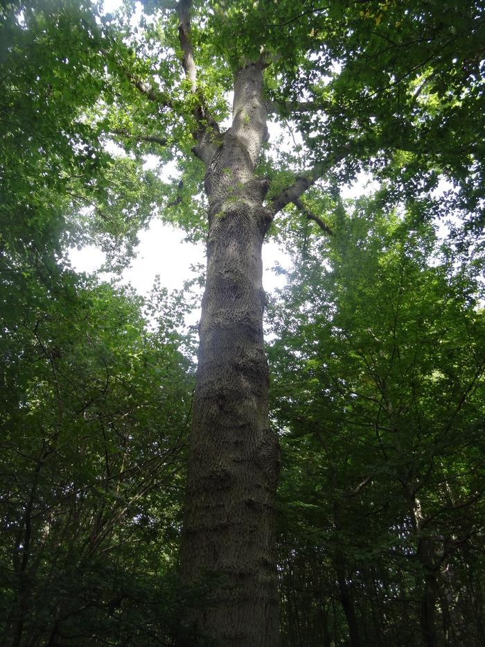 Les passereaux de nos forêts
