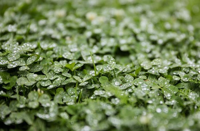 C'est en automne que le sol doit être préparé pour ne pas s'appauvrir durant l'hiver pour accueillir les plantations de printemps. Vous apprendrez comment vous en occuper durant les périodes froides.