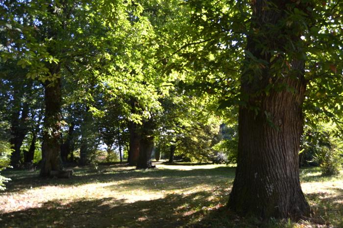 Journées du patrimoine 2019 - Ressourcez-vous en parcourant les chemins de l'arboretum...
