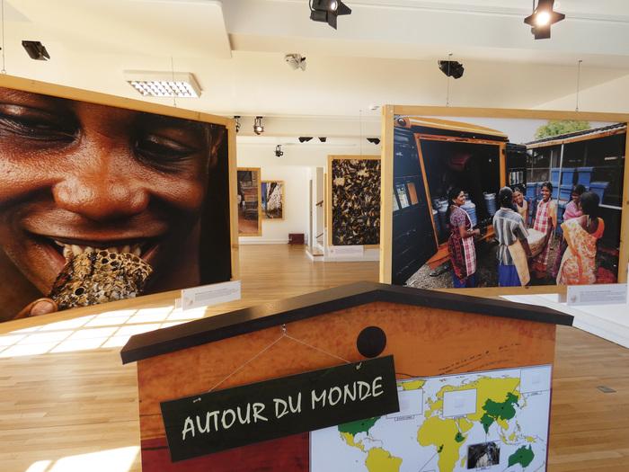 Journées du patrimoine 2019 - Visite guidée de l'exposition Abeilles, une histoire naturelle