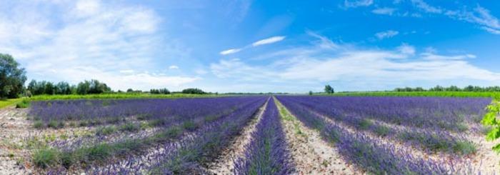 Journées du patrimoine 2019 - Découverte de la culture des plantes à parfum et de la distillation
