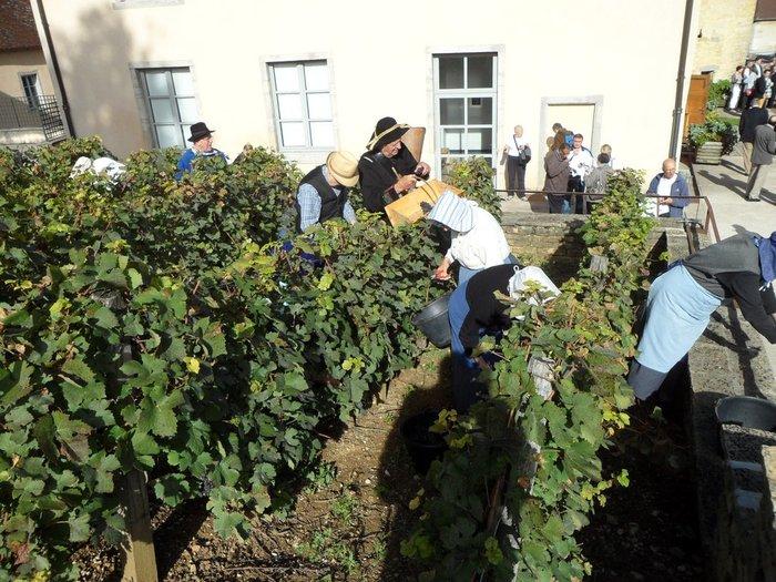 Journées du patrimoine 2019 - Mâchon vigneron / Vendanges à l'ancienne / cortège vigneron et dégustation