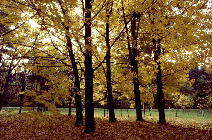 Journées du patrimoine 2020 - Embarquement immédiat pour l'Arboretum d'Amance