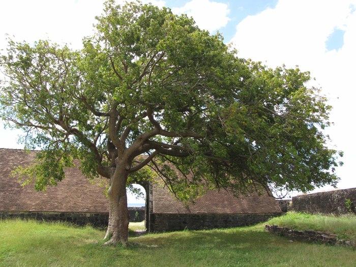 Journées du patrimoine 2019 - Emmène ta lampe torche et explore le fort Delgrès