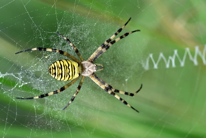Venez en apprendre plus sur les araignées. Vous serez surpris de la diversité et de la beauté de certaines.
