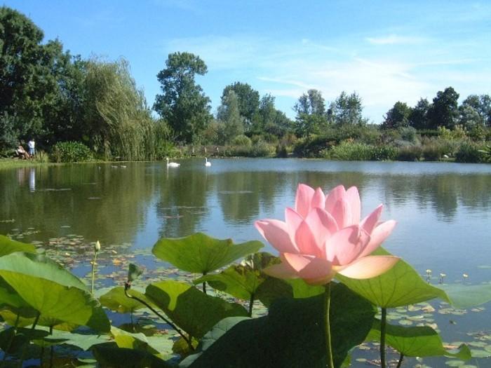 Journées du patrimoine 2020 - Visite libre des jardins aquatiques