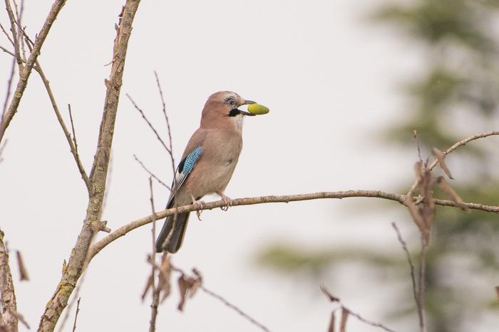 Venez découvrir la richesse ornithologique du parc des Beaumonts, où la faune et la flore sauvages sont protégées. Promenade détendue et conviviale.