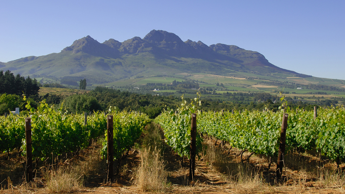 Afterwork Afrique du Sud
