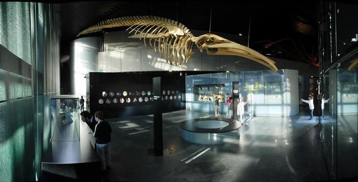 Journées du patrimoine 2019 - Dans les coulisses du Muséum