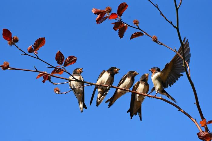 Découvrez quels sont les oiseaux migrateurs qui quittent notre territoire à l'arrivée de l'hiver et reviennent au printemps.