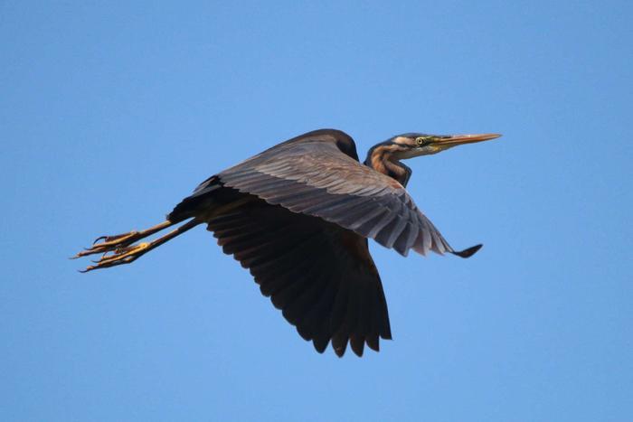 Journées du patrimoine 2020 - Les oiseaux du Bagnas