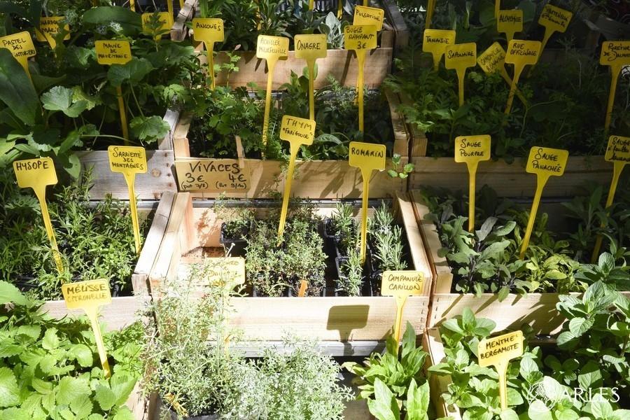 Avec un botaniste, découvrir et savoir utiliser les plantes printanières poussant sur le Jardin des Avettes