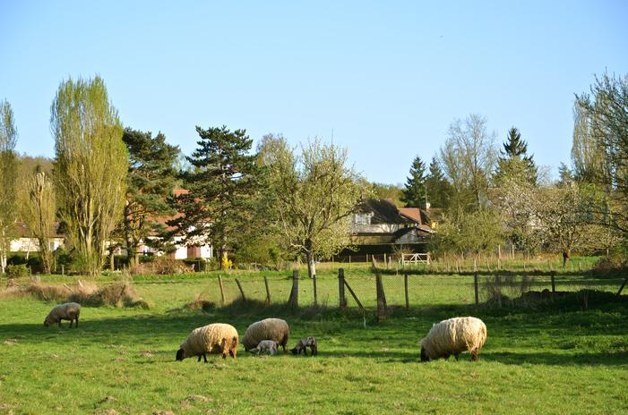 Journées du patrimoine 2020 - Balade commentée autour de Bazoches