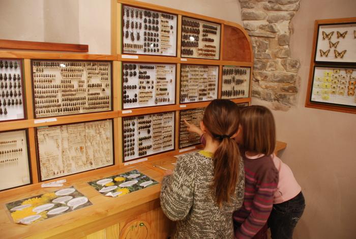 Journées du patrimoine 2019 - Visite libre des collections d'histoire naturelle
