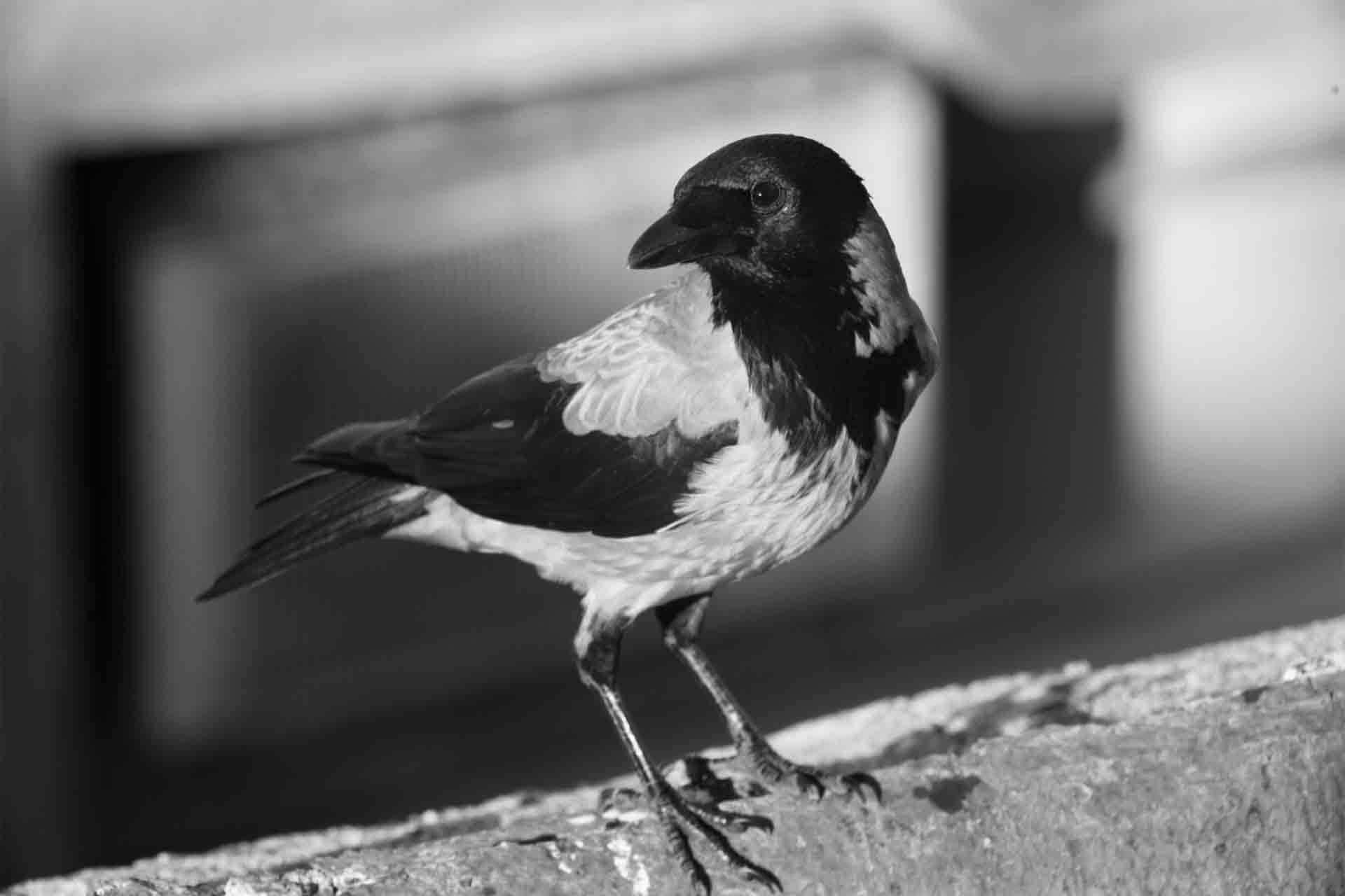Vernissage Omar Malas « The Crow's Eye » (Reporté)