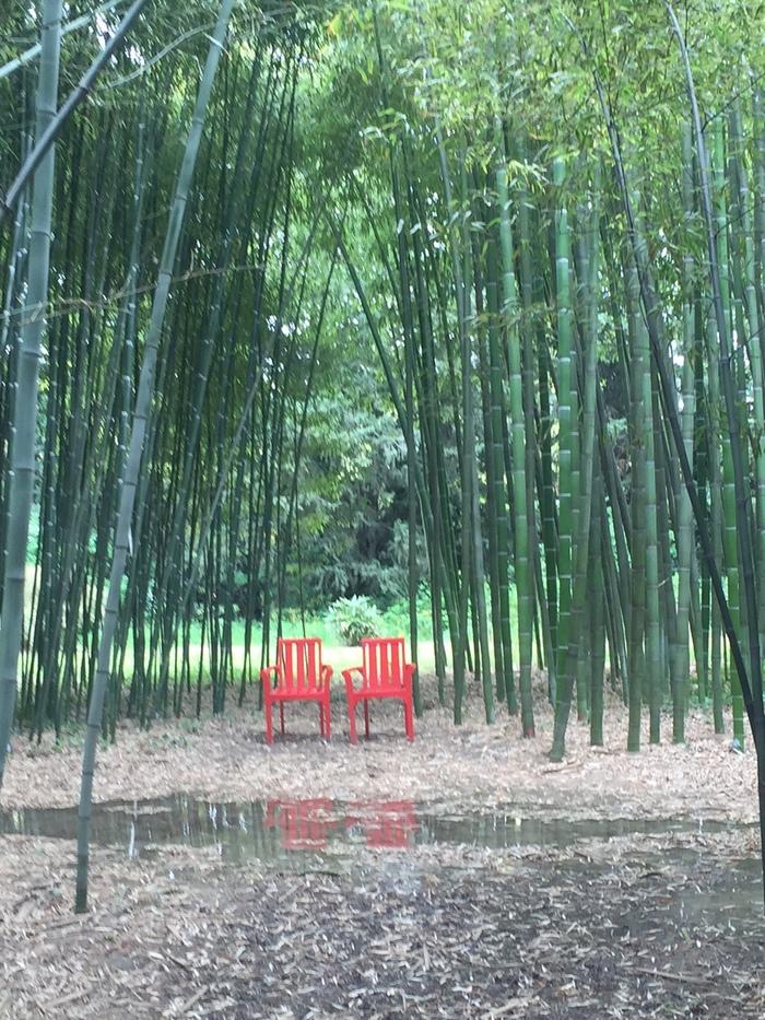 Journées du patrimoine 2019 - Visite du jardin Bambous en Provence