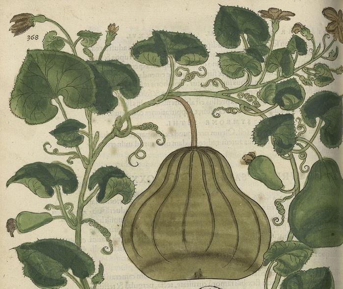 Journées du patrimoine 2019 - Visite commentée de la Bibliothèque du Patrimoine