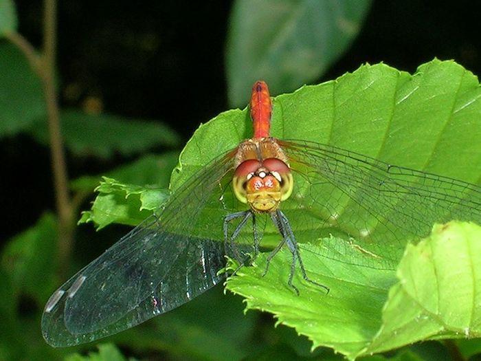 Sortie naturaliste à la découverte des insectes