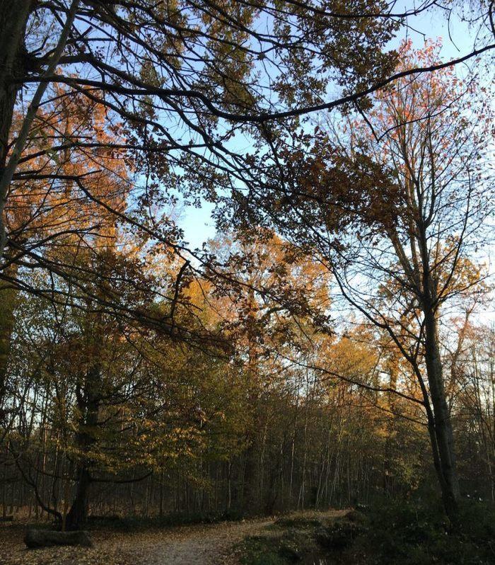 Atelier d'automne