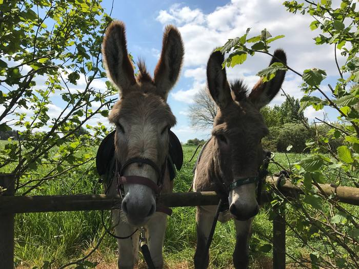 Journées du patrimoine 2020 - Balade accompagnée avec des ânes