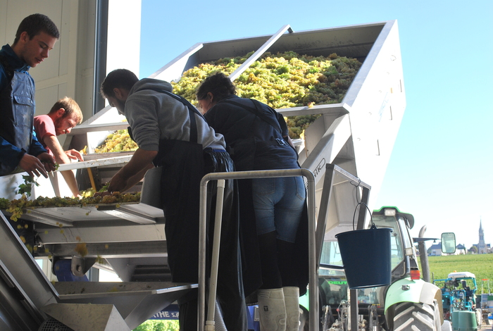 Journées du patrimoine 2020 - Les gestes de la vigne