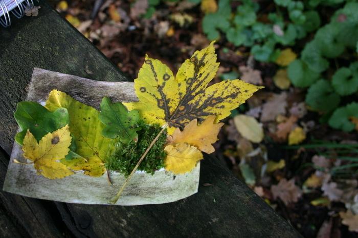 Venez découvrir la biodiversité du parc : plantes, insectes et oiseaux... Ils n'auront plus de secret pour vous.