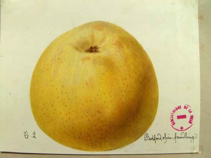 Exposition de pommes à Cléguer