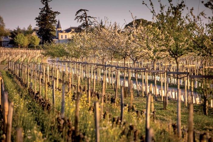 Parcours «Château Cheval Blanc et l'agroécologie, un cas d'étude à ciel ouvert»