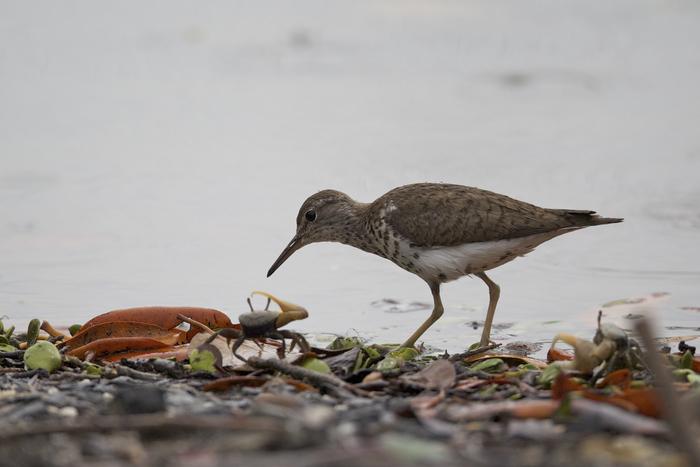 Journées du patrimoine 2020 - FdF / Les oiseaux de la Mangrove