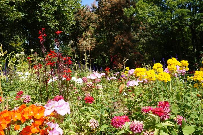 Journées du patrimoine 2020 - Visite guidée du jardin et de l'exposition florale « Éclosion de vie, éclosion de fleurs »