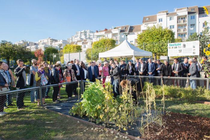 Journées du patrimoine 2019 - Récolte des graines du jardin Vavilov