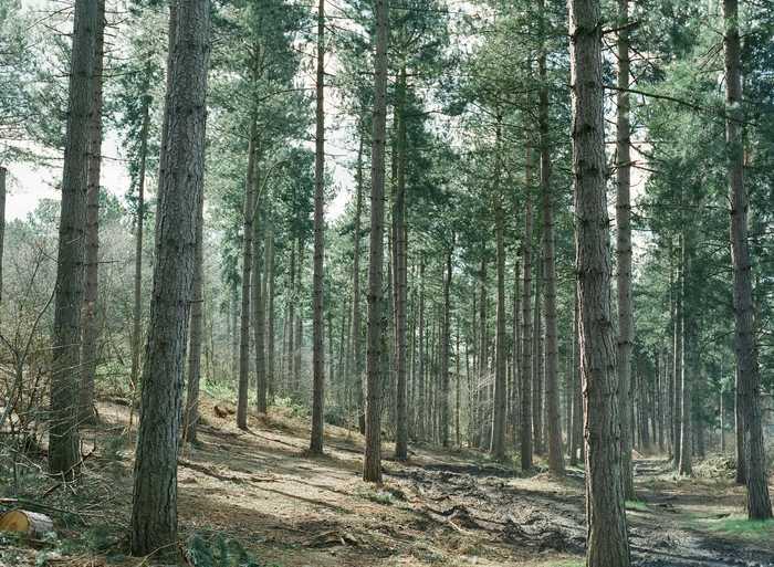 Journées du patrimoine 2019 - De la forêt au bois énergie