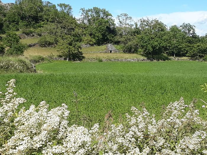 Journées du patrimoine 2020 - Parcours botanique de la Vallée du Dolaizon (chibottes)