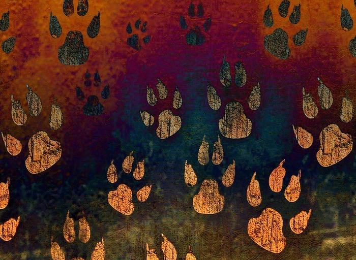 Sur la trace des animaux sauvages