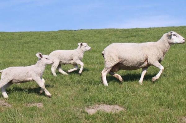 Fête de l'agneau à Mérignac
