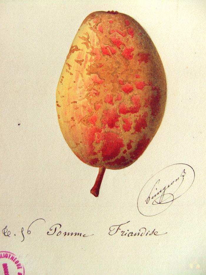 Identification de pommes à Bannalec