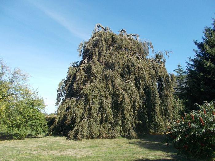 Journées du patrimoine 2020 - Visite du parc arboré du château de Charmes