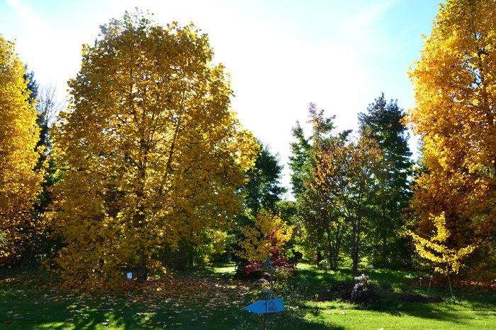 Journées du patrimoine 2020 - Visite libre de l'arboretum