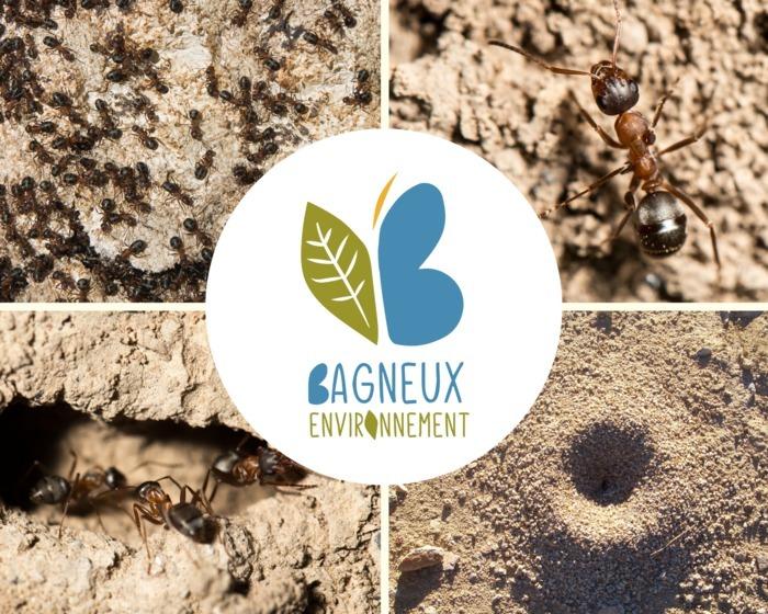 Les P'tits Ateliers Nature : Les fourmis