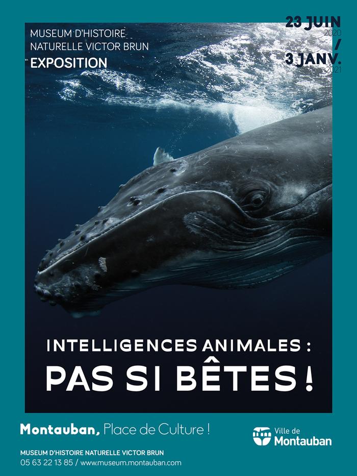 Journées du patrimoine 2020 - Exposition « Intelligences animales : pas si bêtes »