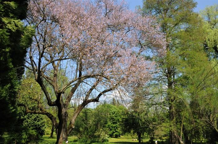 Journées du patrimoine 2020 - Patrimoine universitaire - Visite guidée de l'arboretum Robert Ruffier-Lanche