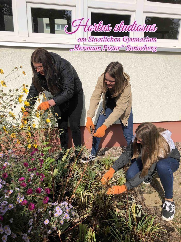 Naturnaher Garten statt Schulhof: Hortus studiosus am Staatlichen Gymnasium