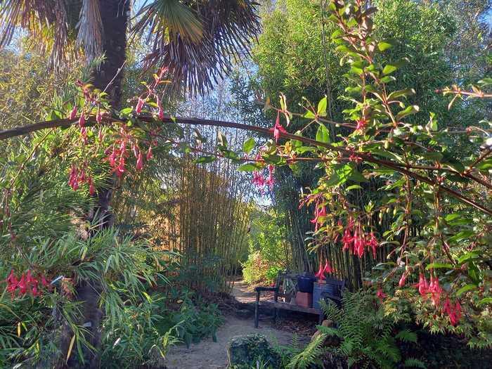 Visite d'un jardin de bambou érable palmier plante du Chili