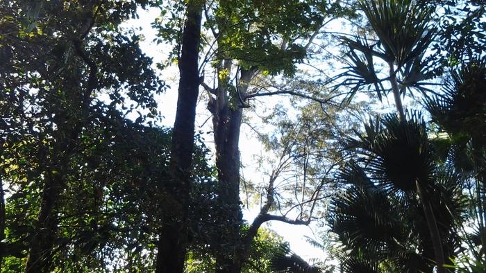 Journées du patrimoine 2019 - Le jardin de la maison Lenormand, ancien domaine de Mahavel