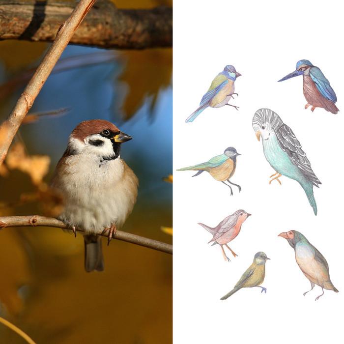 C les vacances ! - À tire-d'aile : oiseaux observés et rêvés