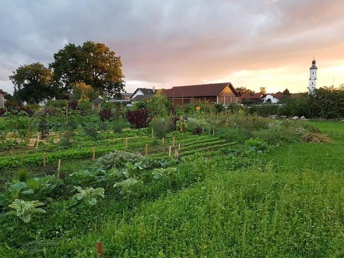 Sehen, riechen, schmecken, fühlen... Gemüse anbauen mit Leidenschaft!  Erstmals dabei: Gärten im Gartenwinkel Pfaffenwinkel